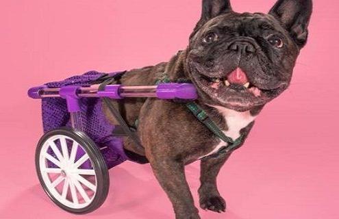 silla ruedas 3d